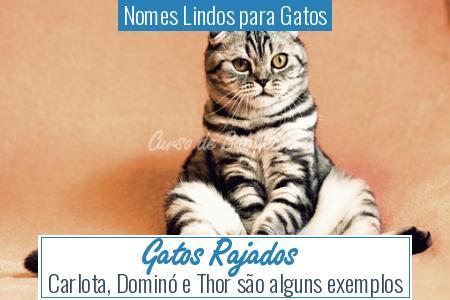 Nomes Lindos para Gatos - Gatos Rajados