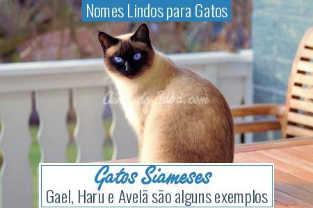 Nomes Lindos para Gatos - Gatos Siameses