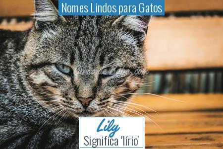 Nomes Lindos para Gatos - Lily