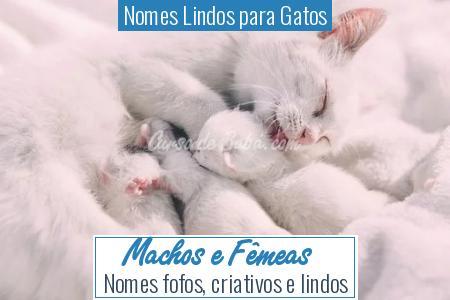 Nomes Lindos para Gatos - Machos e Fêmeas