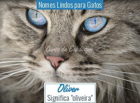 Nomes Lindos para Gatos - Oliver