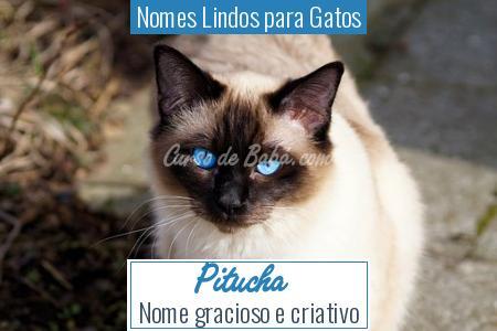 Nomes Lindos para Gatos - Pitucha