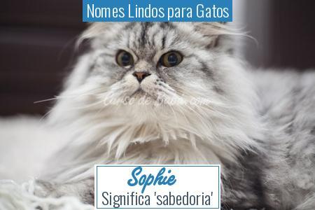Nomes Lindos para Gatos - Sophie
