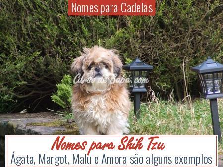 Nomes para Cadelas - Nomes para Shih Tzu