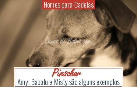 Nomes para Cadelas - Pinscher