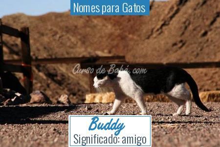 Nomes para Gatos  - Buddy