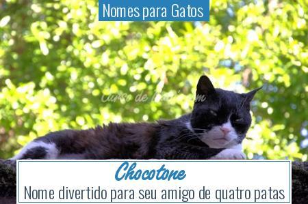 Nomes para Gatos  - Chocotone