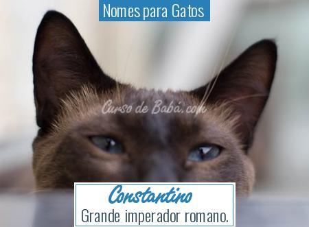 Nomes para Gatos  - Constantino