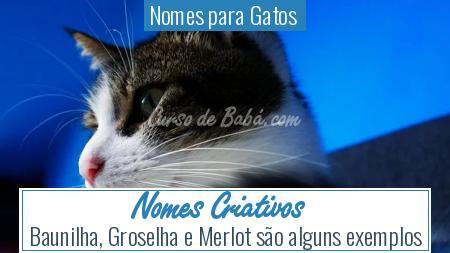 Nomes para Gatos  - Nomes Criativos