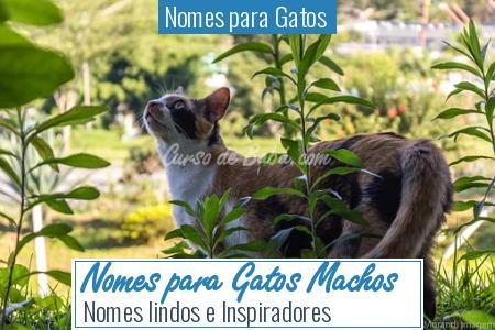 Nomes para Gatos  - Nomes para Gatos Machos