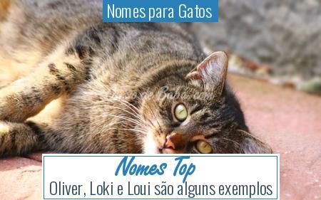 Nomes para Gatos  - Nomes Top
