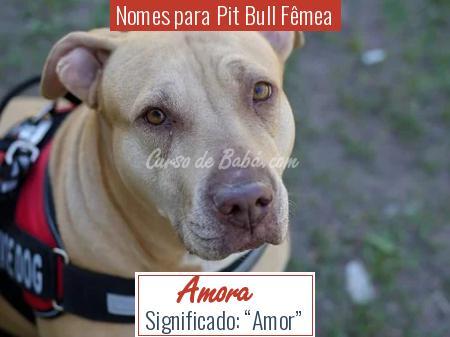 Nomes para Pit Bull Fêmea - Amora