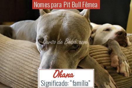 Nomes para Pit Bull Fêmea - Ohana