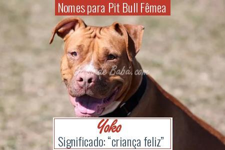 Nomes para Pit Bull Fêmea - Yoko