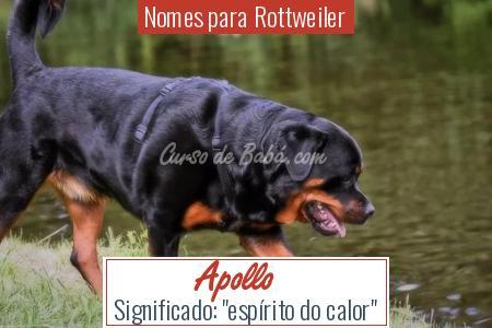 Nomes para Rottweiler - Apollo