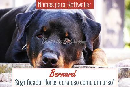Nomes para Rottweiler - Bernard