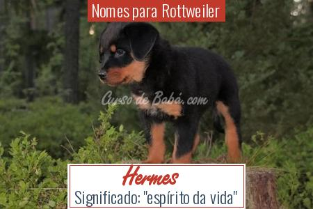 Nomes para Rottweiler - Hermes