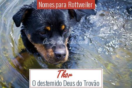 Nomes para Rottweiler - Thor