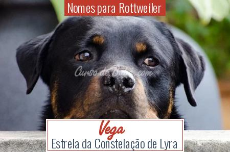 Nomes para Rottweiler - Vega
