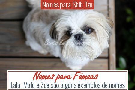 Nomes para Shih Tzu - Nomes para Fêmeas