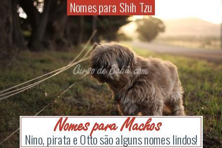 Nomes para Shih Tzu - Nomes para Machos