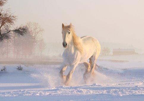 lendas-regiao-sudeste-cavalo-invisivel