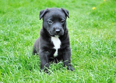 https://cursodebaba.com/images/nomes-cachorro-engracados12.jpg
