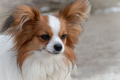 nomes-cachorros-pequenos-apolo