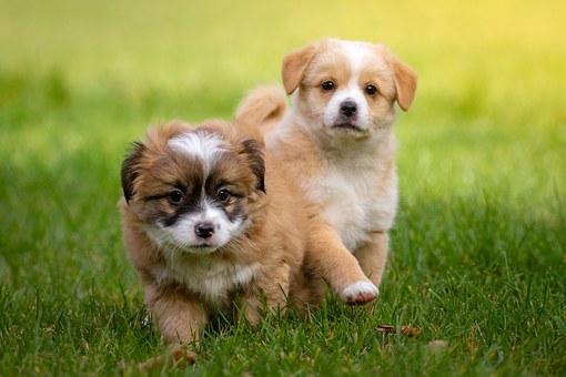 nomes-cachorros-pequenos-macho-thor
