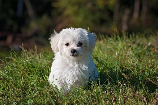 nomes de cachorros pequenos machos e femeas