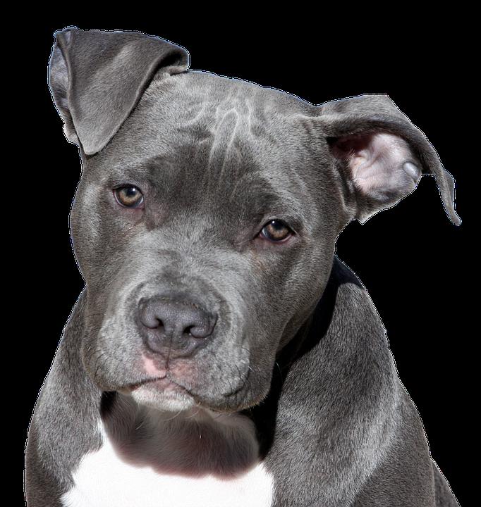 https://cursodebaba.com/images/nomes-cadelas-cachorros-femeas-roxy.jpg
