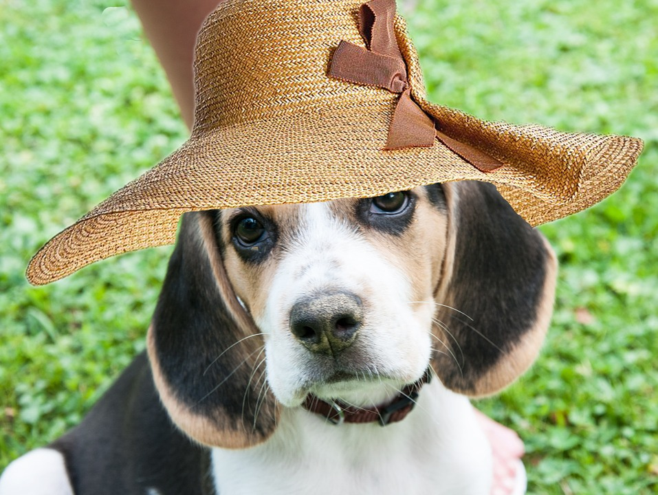 nomes de cadelas, cachorros femeas, cadelas dos famoso, nomes de cadelas, chiques