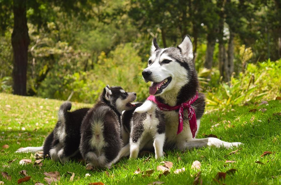 nomes-cadelas-cachorros-filhotes