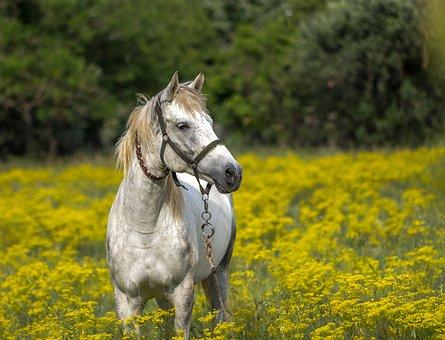 nomes-cavalos-tordilhos