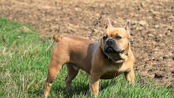 nomes fortes para cachorros machos e f�meas