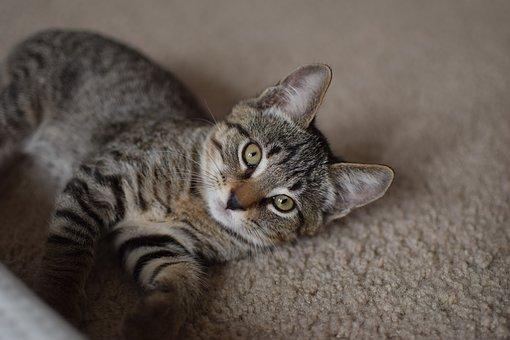 nomes-franceses-gatos