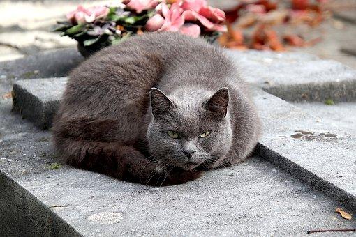 nomes para gatos cinza, cinza com olhos azuis