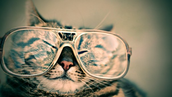 nomes-gatos-famosos-filmes