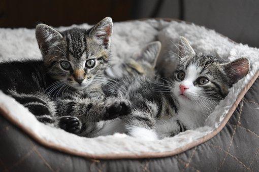 nomes-gatos-femeas
