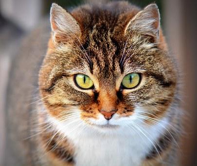 nomes-gatos-guerreiros