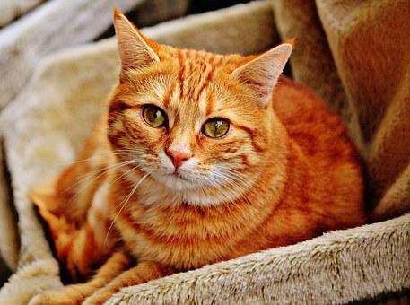 nomes-gatos-laranjas