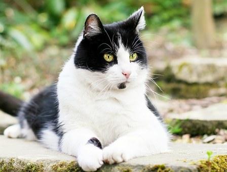 https://cursodebaba.com/images/nomes-gatos-preto-branco13.jpg
