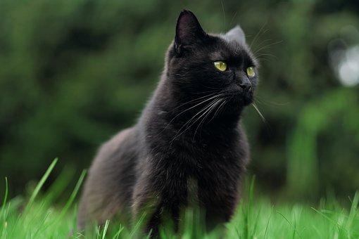 nomes-gatos-preto