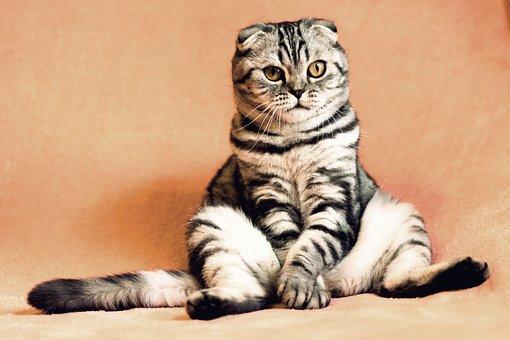 nomes-gatos-rajados