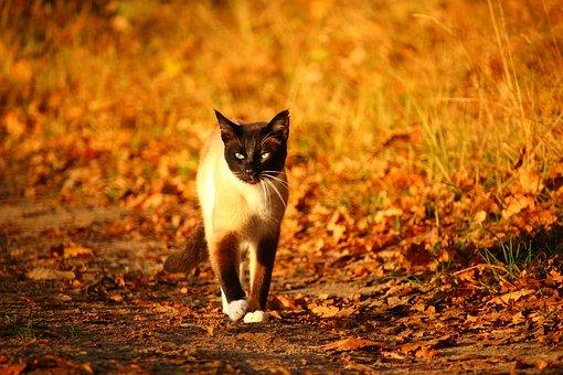 https://cursodebaba.com/images/nomes-gatos-siameses-masculino12.jpg