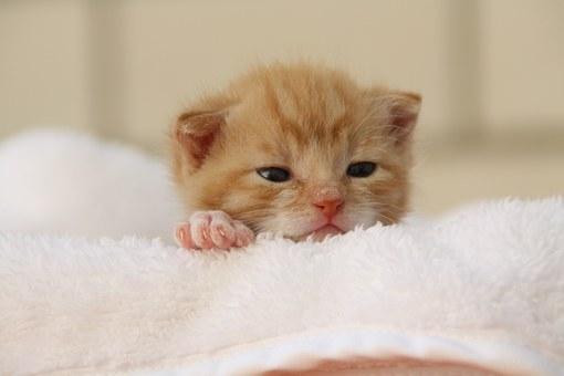 nomes-gatos-significados-bella
