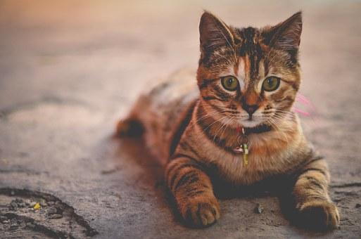 nomes-gatos-significados-charlie