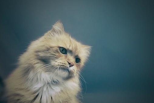 nomes-gatos-significados-chloe