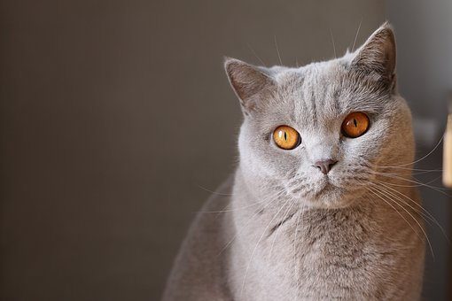 nomes-gatos-significados-george