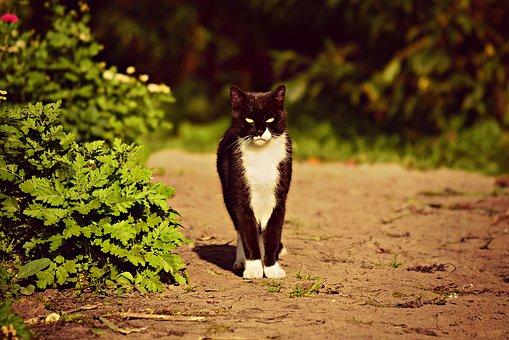 https://cursodebaba.com/images/nomes-gatos.jpg